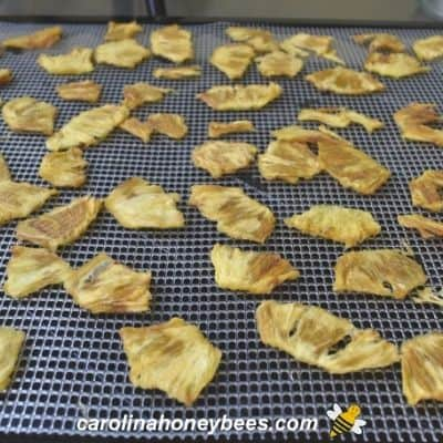 Dried pineapple slices from dehydrator image.