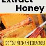 Frames of honey in an extractor. How to extract honey image.