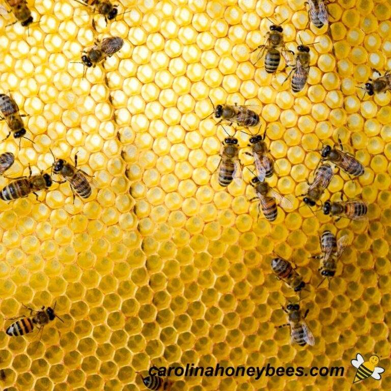 How to Get Your Bees to Build Comb Faster