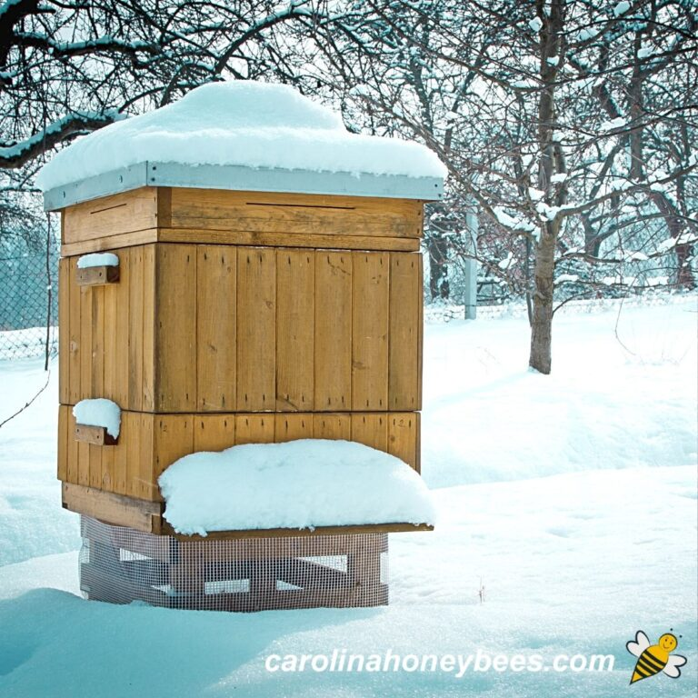 How do Bees Survive Winter?