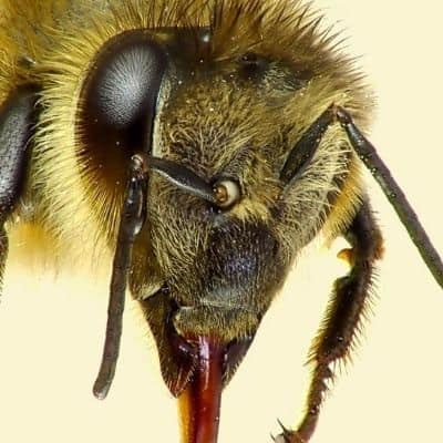 How do Bees See Flowers?