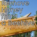 Fresh frame of honey from a beehive image.