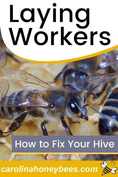 Worker bees laying workers in a beehive image.