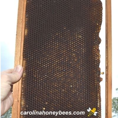 Beekeeper holding frame up to sun to see if light shows through or it is time to be replaced image.