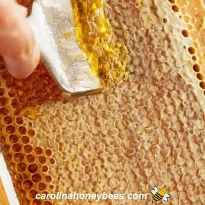 Using cappings scratcher to remove honey cappings from frame image.