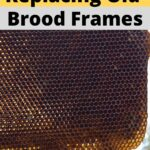 Dark comb in and old brood frame of a hive suitable for rotation out image.