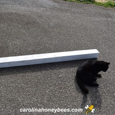 Wooden pole sprayed with white sealer and black cat helper image.