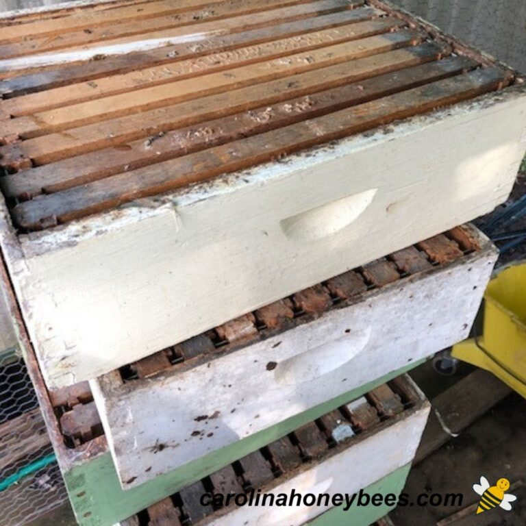 How to Store Honey Supers – Protecting Drawn Comb