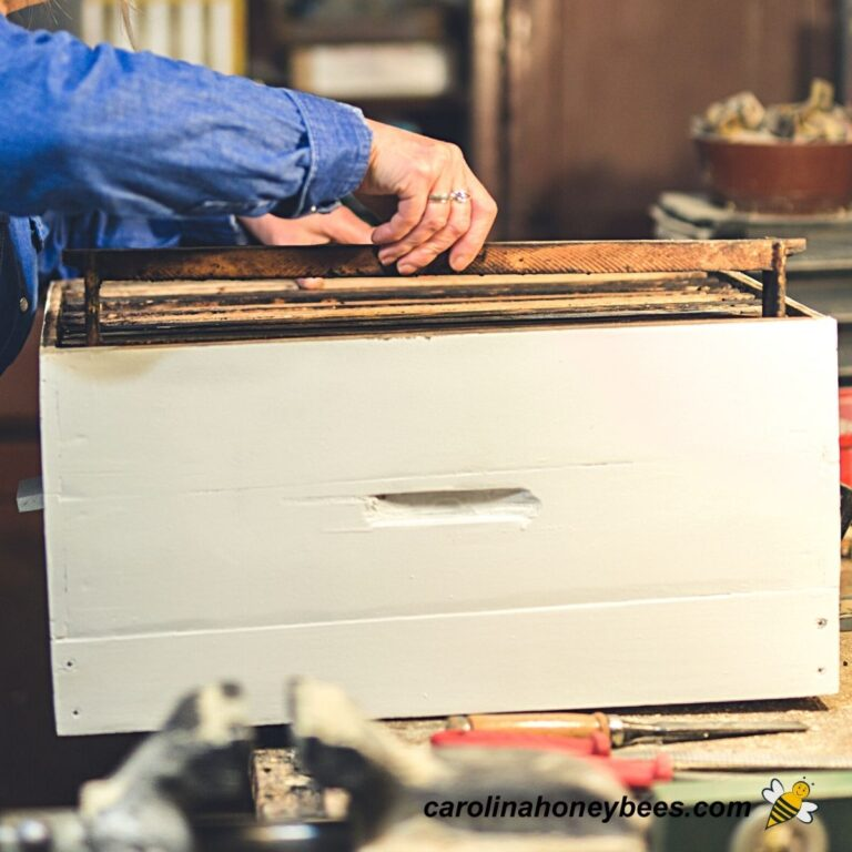 How to Build a Beehive of Your Own