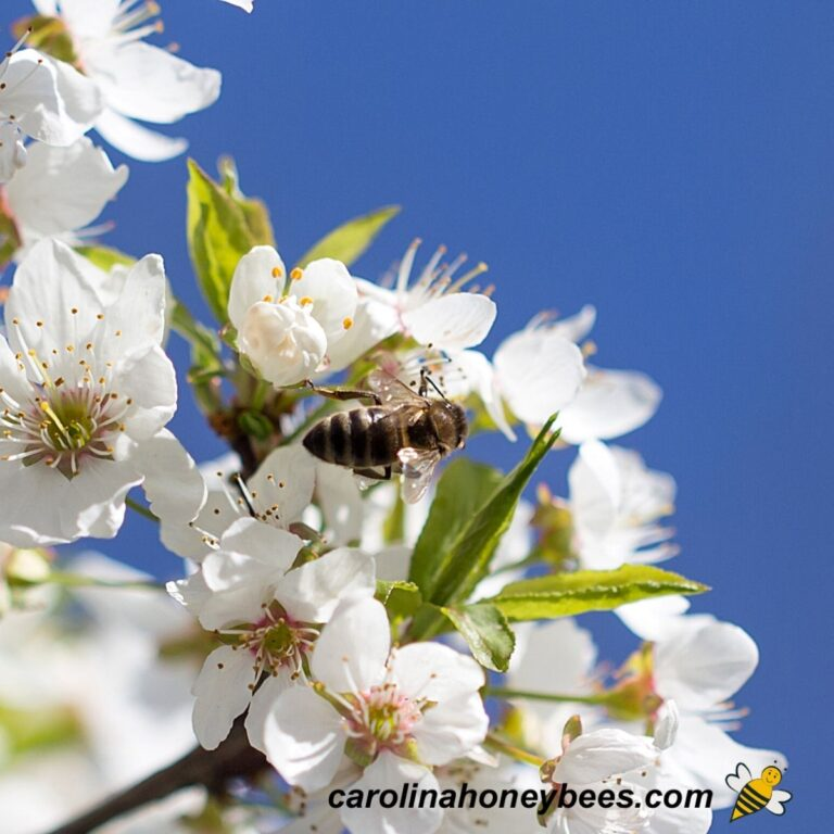 Favorable Flowering Trees for Bees