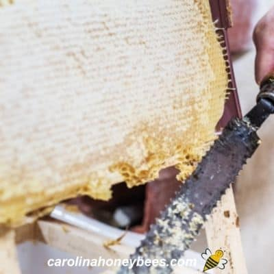 Using knife to uncap honey frame prior to extracting image.