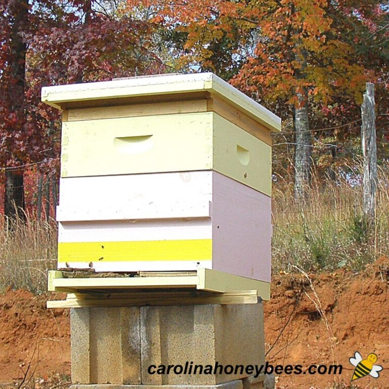 Beehive Plans to Build Your Own Hives