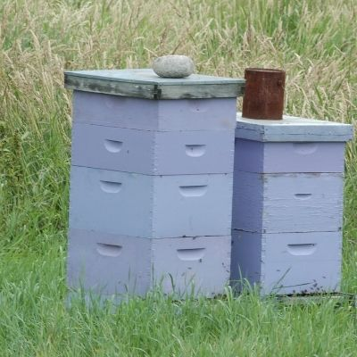 How Far From the House Should Beehives Be
