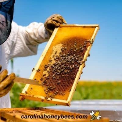 Fonda beekeeper man image.