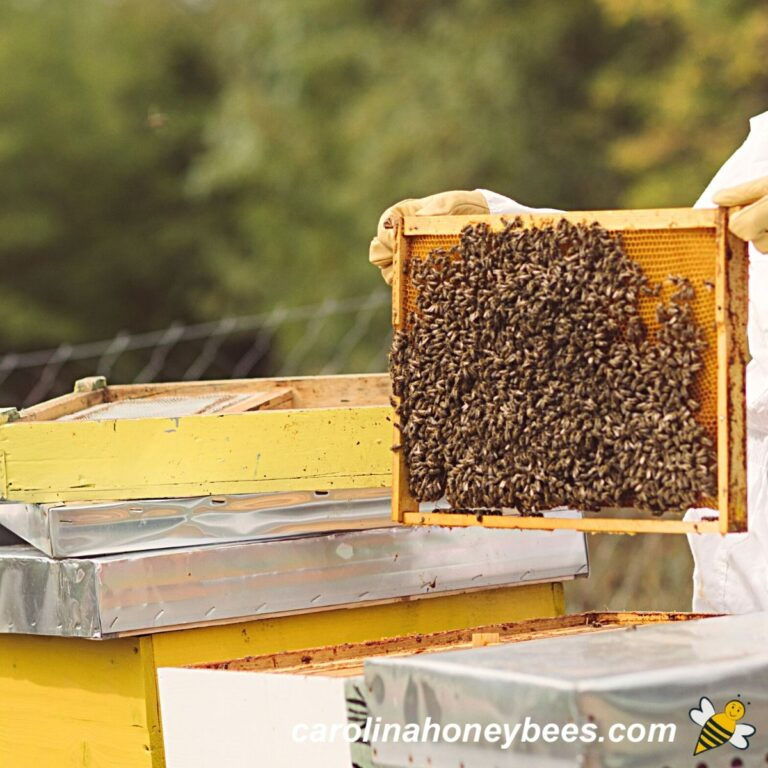 Beekeeping for Beginners-Getting Started