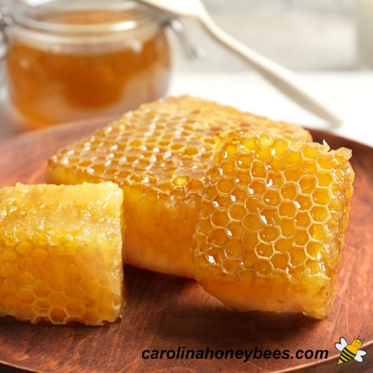 How to Eat Honeycomb Wax