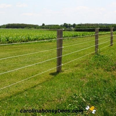 Strands of electric fence wire on posts image.