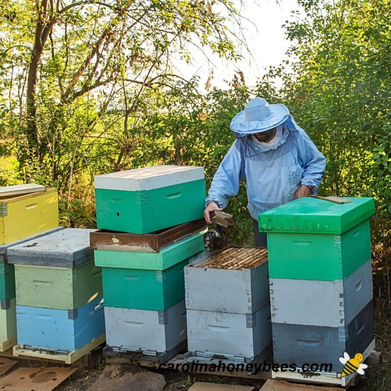 Feeding Bees in Fall – {Beekeeper's Guide}