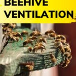 Honey bees fanning at hive entrance to aid in beehive ventilation image.
