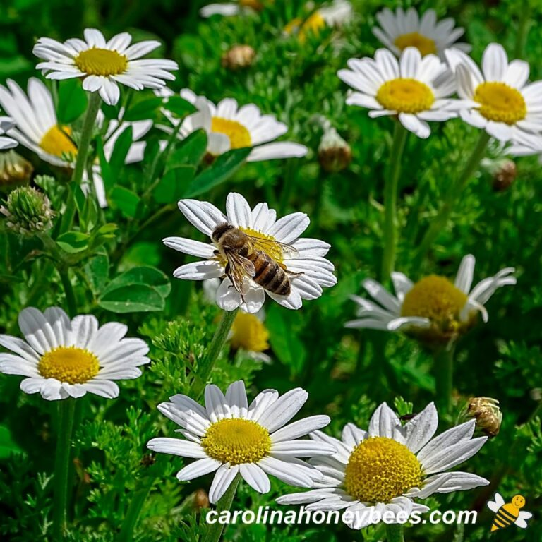 How to Make a Bee Garden in Your Backyard