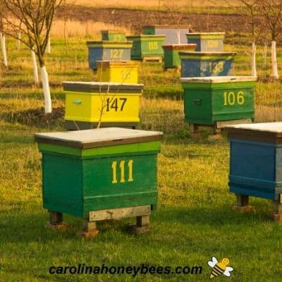Larger number of beehives in one apiary requires more space image.