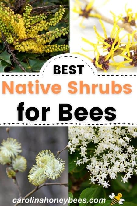 Flowering native shrubs for bees and pollinators image.