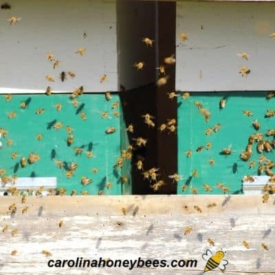 Several honey bee hives with bees in front of hive image.