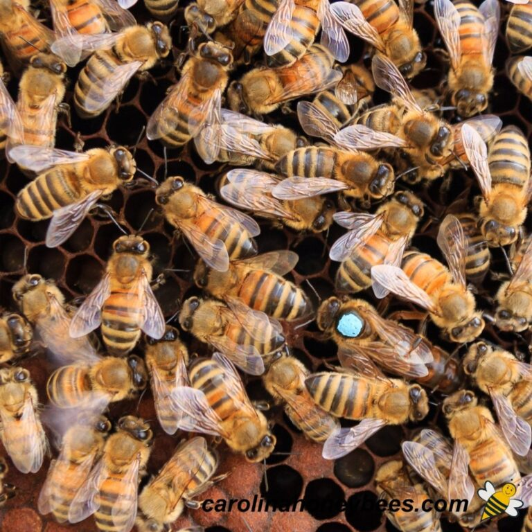 How to Find Your Queen Bee