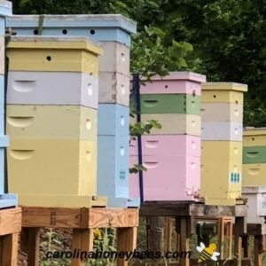 Large number of beehives in apiary image.