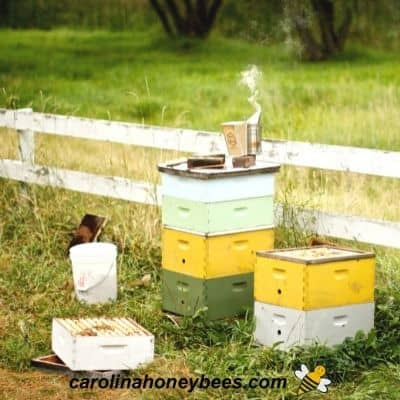 A couple of beehives in a backyard space during inspection image.