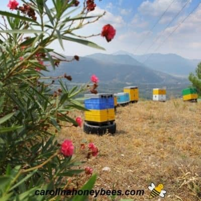Apiary in a mountain area image.