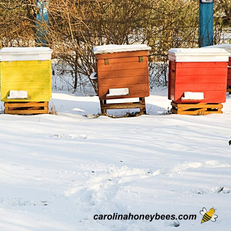 How to Winterize a Beehive {Step by Step}