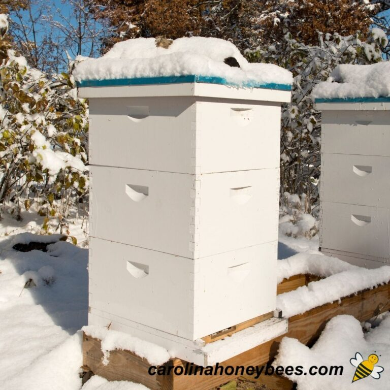 Feeding Bees For Winter {Quick Tips for Success}