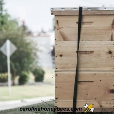 Large beehive near city road image.