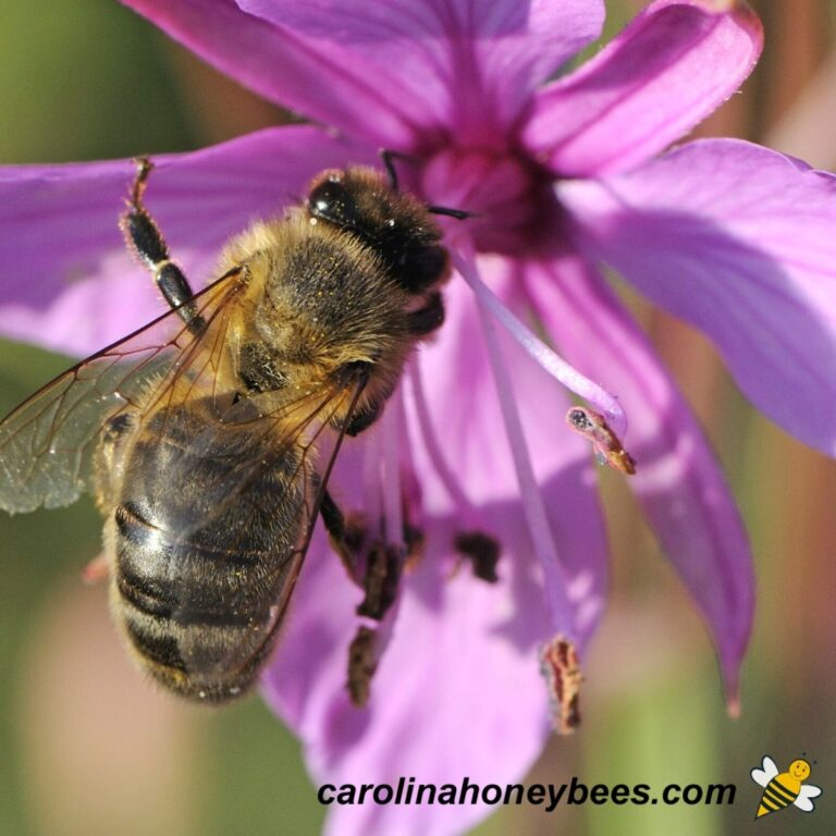 How Long do Bees Live?
