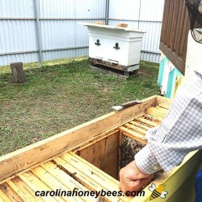 Urban Beekeeping – Benefits and Challenges