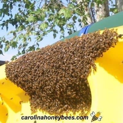 Honey bee swarm on a city slide image.
