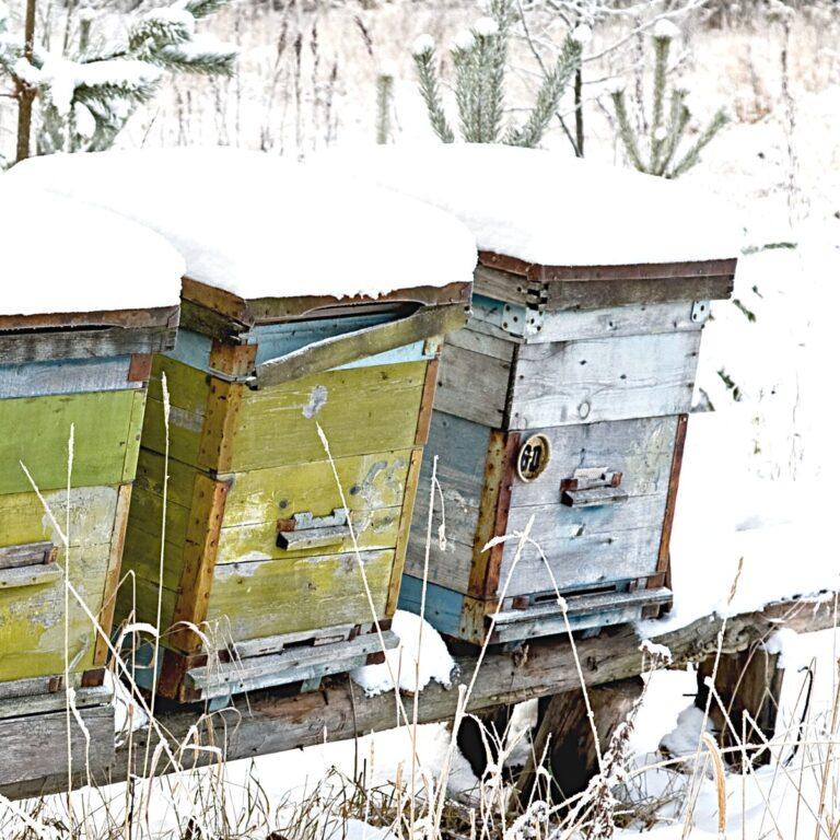 Beekeeping in Winter -Beekeeper Tasks