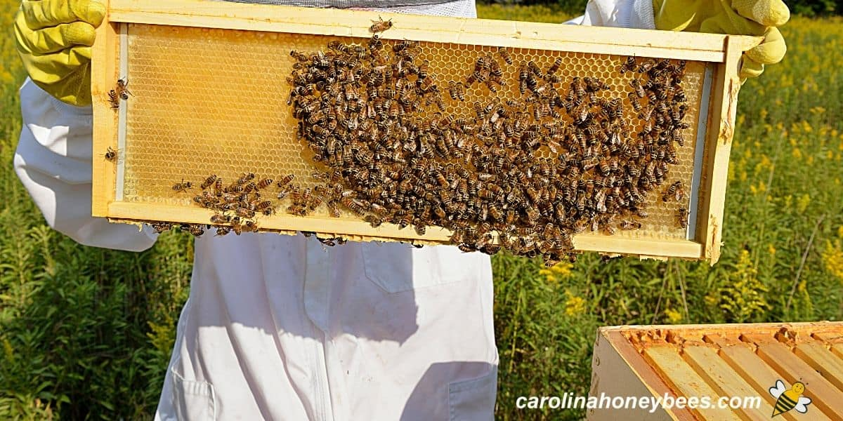 Lady hobby beekeeper with frame of bees image.