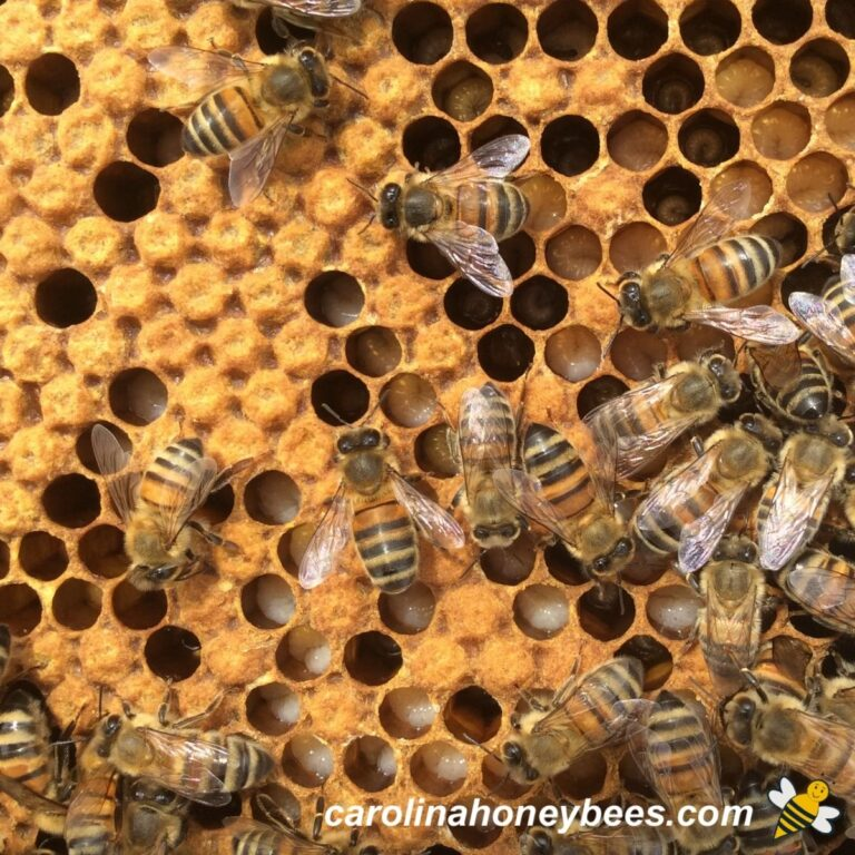 What is a Good Brood Pattern?