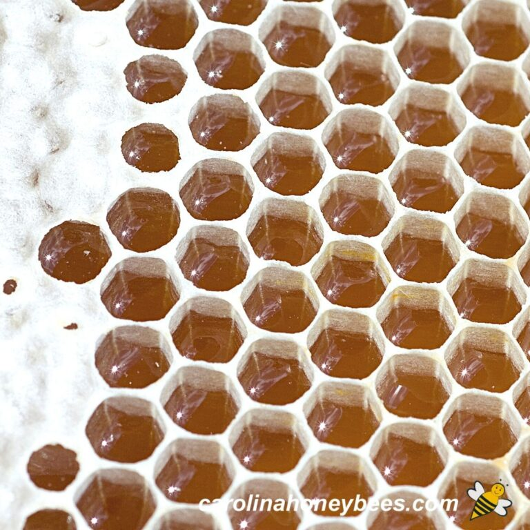 What is Honeycomb Used For?
