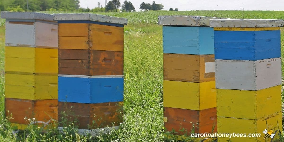 Set of tall beehives before the honey harvest in a field image.