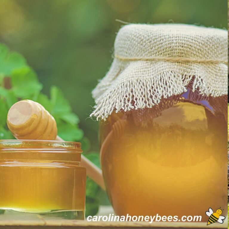 Choose the Best Honey In the World