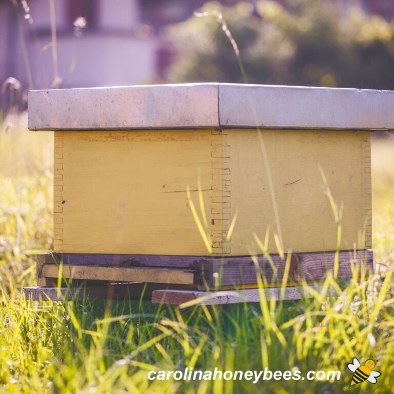 Where to Place a Beehive in Your Backyard