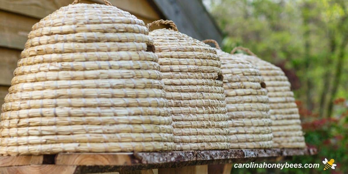 Honey bee skep hives sitting in a row on a platform image.