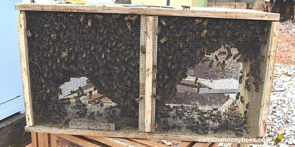 Hobby beekeepers new package of honey bees image.