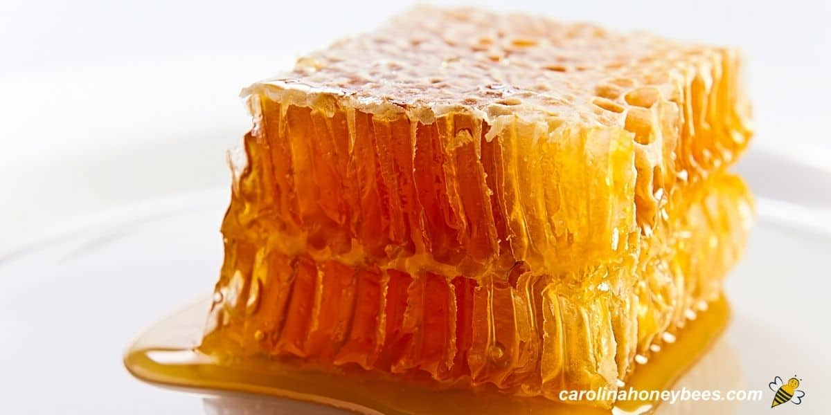Large chunk of honey comb ready to eat image.