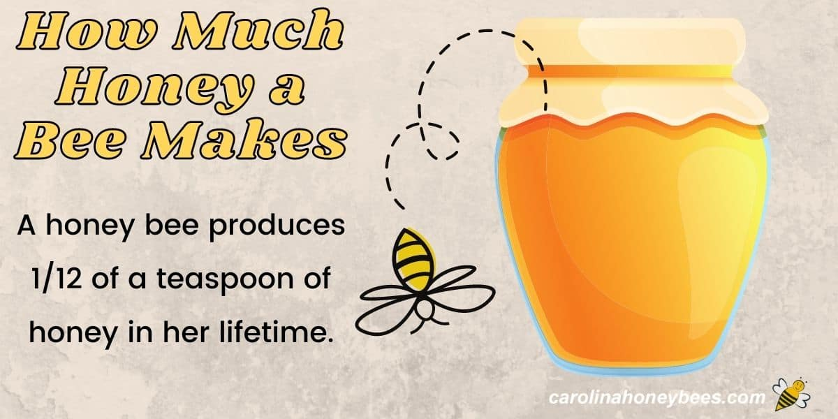 Diagram of how much honey a bee makes image.