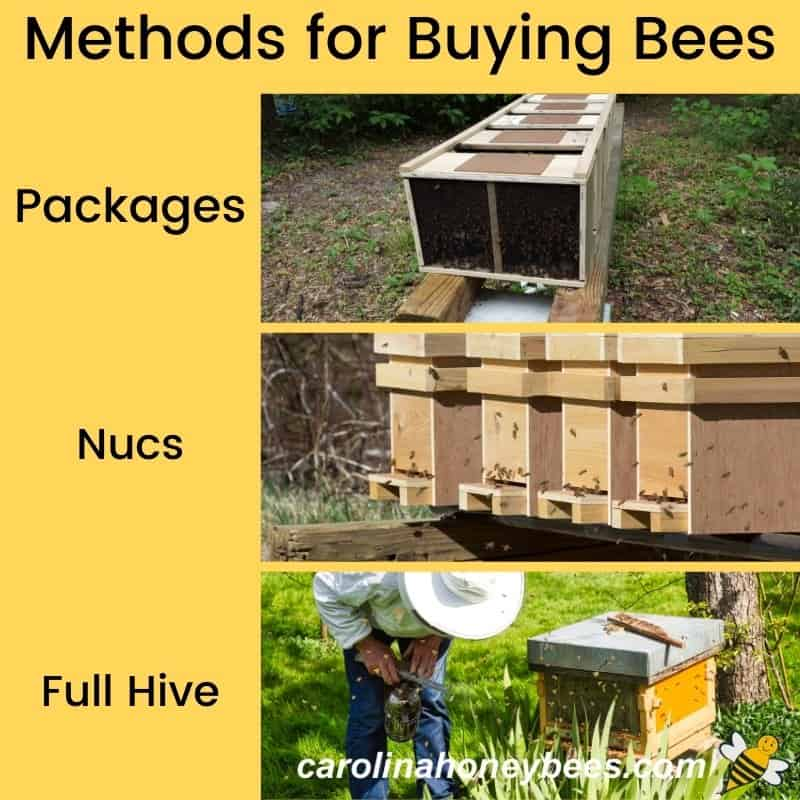 Diagram for various methods of buying bees packages nucs and full hives image.