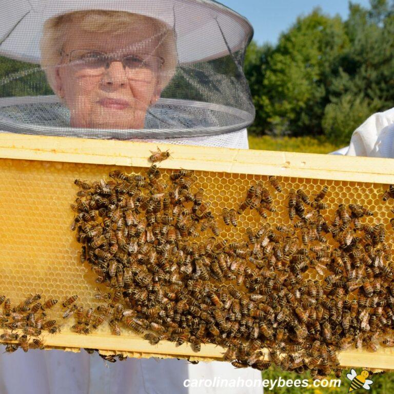 Backyard Beekeeping as a Hobby-A Good Idea?
